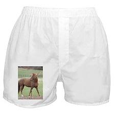Who Me? Boxer Shorts