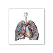 Human Anatomy Heart and Lung Sticker