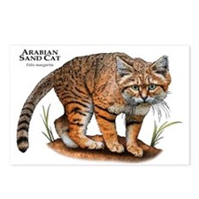 Arabian Sand Cat Postcards (Package of 8)