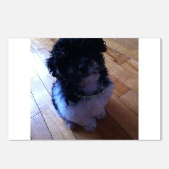 Cute Schnoodle Postcards (Package of 8)