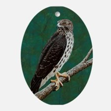 Cooper's Hawk: Ornament (Oval)