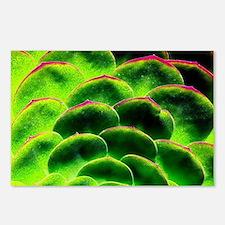 Unique Botanical Postcards (Package of 8)