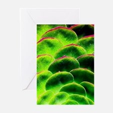 Green Hen Greeting Cards
