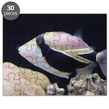 Humuhumunukunukuapaa Puzzle
