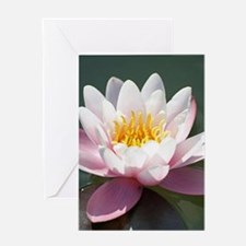 Water Lily 002 Greeting Cards