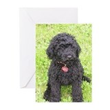 Poodle Greeting Cards (20 Pack)
