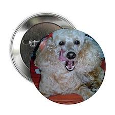 """Cute Pet care 2.25"""" Button"""