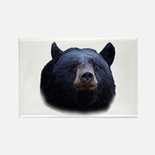 black bear Magnets