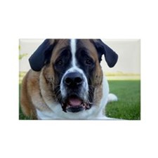 Saint Bernard Rectangle Magnet