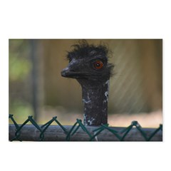 emu looking over the fence at popcorn park zoo ©Amy Marie 2014