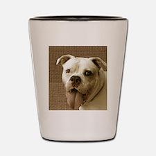 American Bulldog Shot Glass