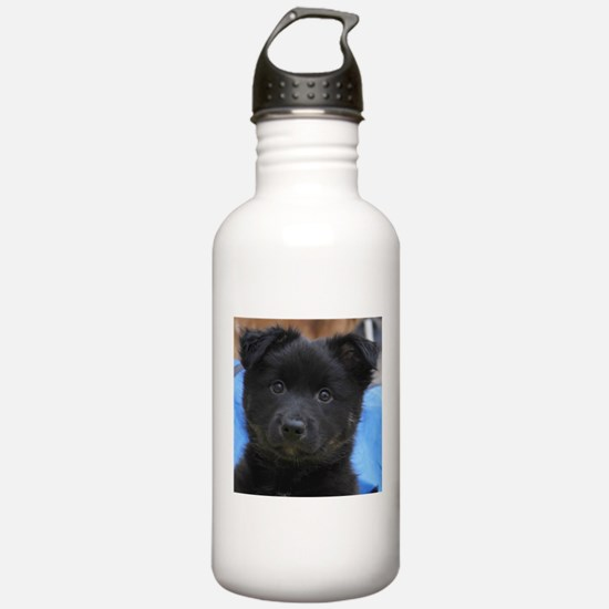 Funny Icelandic sheepdog Water Bottle