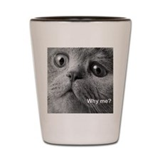 Why me cat. Shot Glass