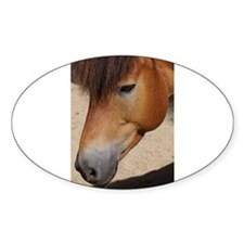 Wonderful Horse Animal Decal