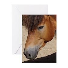 Wonderful Horse Animal Greeting Cards