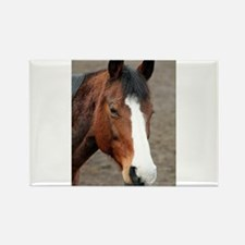 Wonderful Horse Animal Magnets