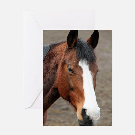 Wonderful Horse Animal Greeting Cards
