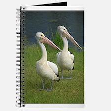 Funny Animal photography Journal
