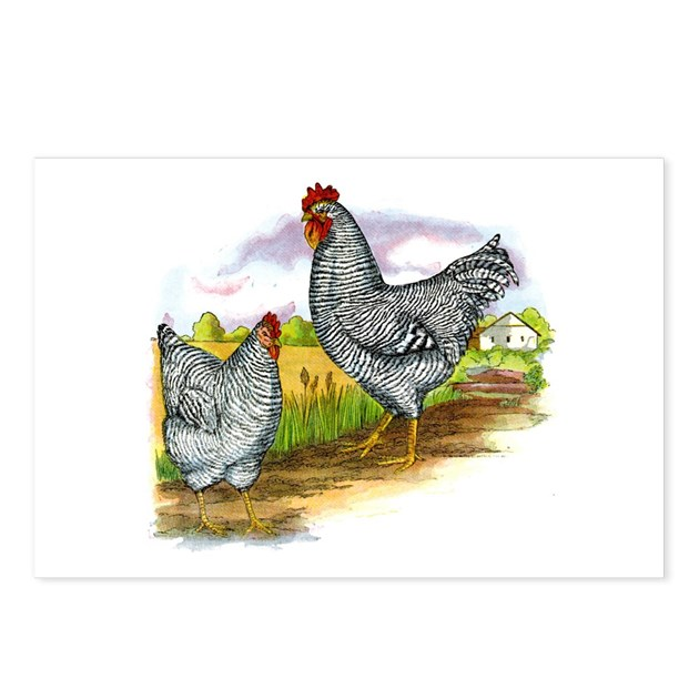 Antique Chicken Illustration Postcards (Package of by cafepets