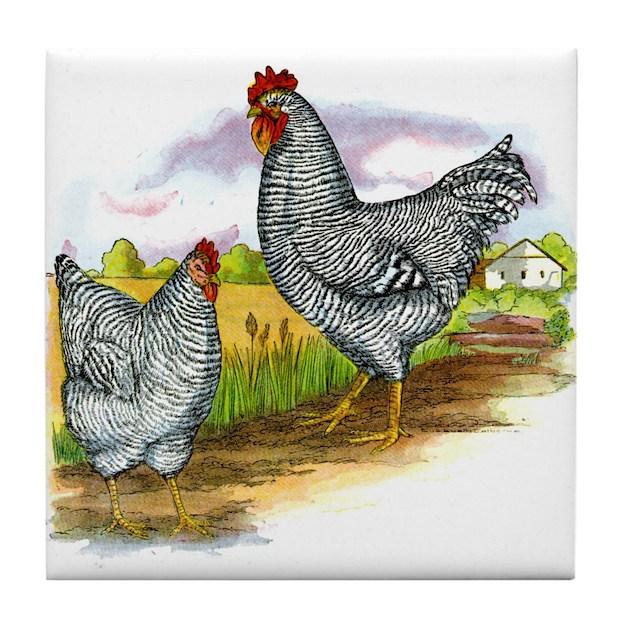 Antique Chicken Illustration Tile Coaster by cafepets