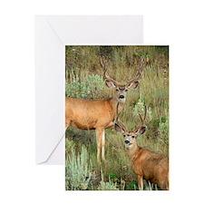 Mule deer velvet Greeting Cards