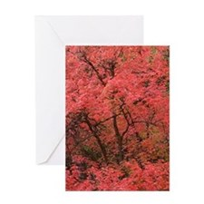 Maple red Greeting Cards