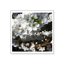 "Plum Tree in Bloom Square Sticker 3"" x 3"""