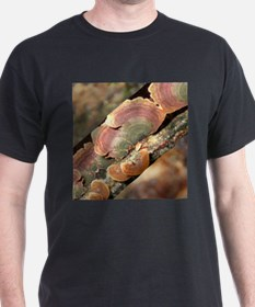 Lichen On A Tree Trunk T-Shirt
