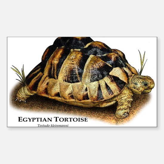 Egyptian or Kleinmann's Tortoi Sticker (Rectangle)