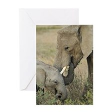 Momma and Baby Elephant Greeting Cards