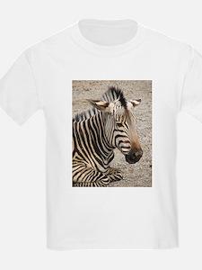 Resting Zebra T-Shirt