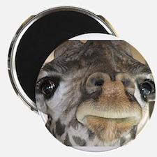 Giraffe Magnets