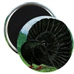 Fantail Black Pigeon Magnets