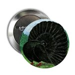 "Fantail Black Pigeon 2.25"" Button (100 Pack)"