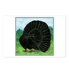 Fantail Black Pigeon Postcards (package Of 8)