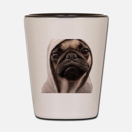 Cute Pugs Shot Glass