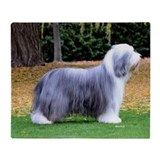 Bearded collie Blankets