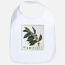 FIN-coffee-arabica-botanical.png Bib