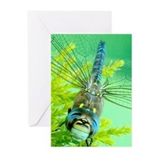 Smiling dragonfly Greeting Cards