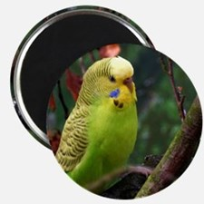 Funny Yellow budgie Magnet