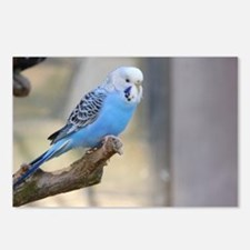 Cool Blue budgie Postcards (Package of 8)