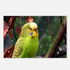 Funny Blue budgie Postcards (Package of 8)