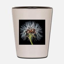 Funny Dandelion seeds blowing in the wind Shot Glass