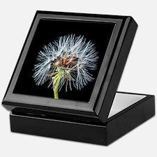Funny Beautiful dewsdrops on dandelion macro photograph Keepsake Box