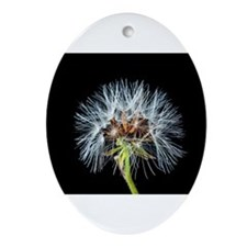 Cute Dandelion seeds blowing in the wind Ornament (Oval)