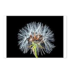 Cute Dandelion seeds blowing in the wind Postcards (Package of 8)