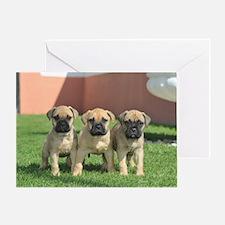 Bullmastiff Puppies Greeting Card