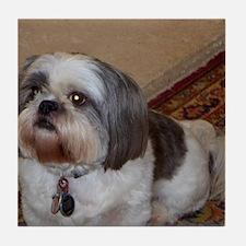 Cute Shih tzu puppy Tile Coaster