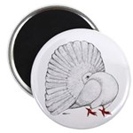Fantail White Pigeon Magnets
