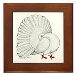 Fantail White Pigeon Framed Tile